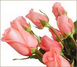 Букет из роз в подарок